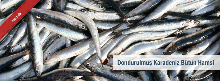 WR Blacksea European Anchovy